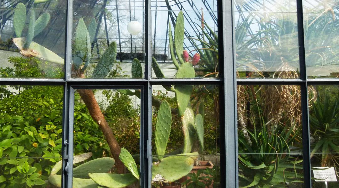Alter Botanischer Garten Palmenhaus